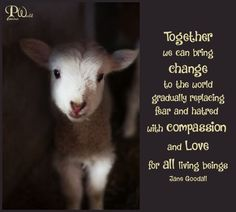 Together we can bring change to the world gradually replacing fear and hatred with compassion and love. Love for all living beings. Animal Rights Quotes, Animal Quotes, Shelter Me, Animal Shelter, Wilderness Society, Compassion Quotes, I Love You God, Jane Goodall, Vegan Animals