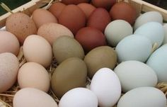 7 Tips For Keeping Backyard Chicken Eggs Safe To Eat