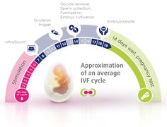 Approximation of an average #IVF cycle