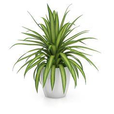 Desde el blog de CGAxis llega este modelo 3D de una planta, incluida como parte de su colección número 50, CGAxis Models Volume 50 Plants III.