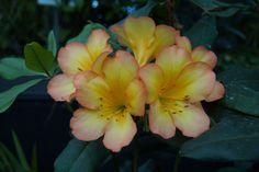 Bei Wanderungen durch blühende Landschaften können oft einzigartige Pflanzen oder Blüten entdeckt werden. Um sich auch nachträglich an die Farbenpracht und Vielfalt zu erinnern, sollten diese fotografisch festgehalten werden. #pflanzenfotos #blüte #natur Wir haben einige Tipps zusammengestellt, die für tolle Pflanzenfotos berücksichtigt werden sollten: http://www.fotos-fuers-leben.ch/fotokurs/naturfotografie/tipps-naturfotografie-pflanzen-blumen/