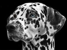 Fotos: Curiosidades científicas sobre los perros - El origen de la amistad perro-humano