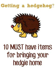 Do you want a pygmy hedgehog? Here are 10 items you NEED to have before you bring your pet hedgie home. Great list that includes some items that pet stores or breeders may not tell you about!: