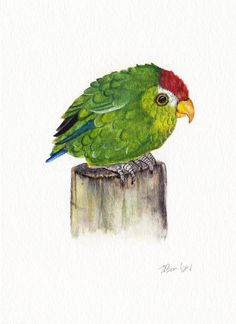 Baby Parrot, original watercolor painting by OneWildKingdom