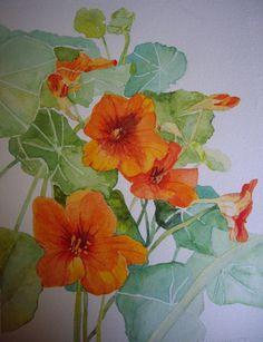 aquarelle florale : capucines durent jusqu'à l'automne : Peintures par orama