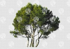 Group of Pine Trees cutout by Gobotree