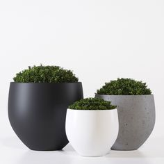 Pottery Pots one model box bush bushes buxus eco, formats MAX, OBJ, FBX, ready for animation and other projects Rectangular Planter Box, Chlorophytum, Pottery Pots, Bush Plant, Buxus, Body Chain Jewelry, Outdoor Pots, Planter Boxes, Topiary