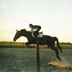 Horse Jumping.  #light #freedom
