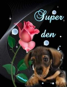 Good Morning, Night, Animals, Text Posts, Buen Dia, Animales, Bonjour, Animaux, Animal
