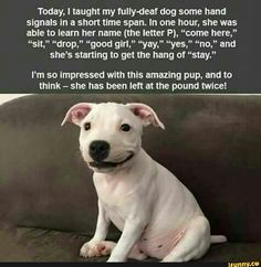 Somebody just needed to give this deaf puppy a chance!