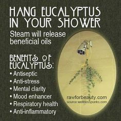 Eucalyptus In The Shower - Holistic Herbal