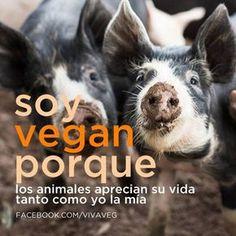 Soy VEGAN porque los animales aprecian su vida tanto como yo la mía. New Soul, Amor Animal, Vegan Quotes, Why Vegan, Real Facts, Veggie Recipes, Veggie Food, Animal Rights, Stop Animal Cruelty