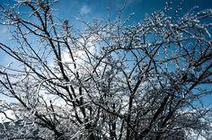 Landscape, strong winter