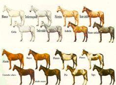 Pelajes de los caballos criollos.