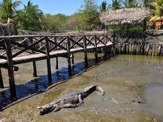 El Cora Crocodile Sanctuary in Nuevo Vallarta. Just 15 minutes north of Puerto Vallarta, Mexico.