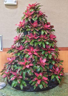 Christmas tree made of Bromeliads Tropical Christmas, Coastal Christmas, Tropical Garden, Tropical Plants, Air Plants, Indoor Plants, Christmas Decorations For The Home, Christmas Trees, Xmas Theme