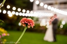 Bedford Village Inn Wedding Venue ~ An evening outdoor dance ~ Love, Artifact Images NH MA Wedding Photographers