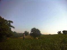 Field dogs