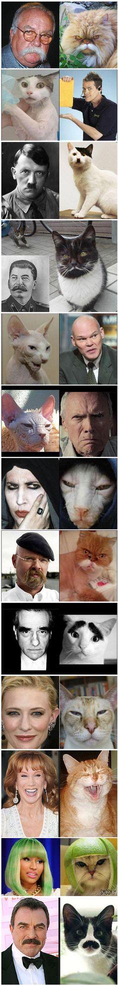13 Cats That Look Like Celebrities...haha!!