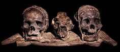 IFUGAO TRIBE: TWO HUMAN HEADHUNTED  TROPHY SKULLS MOUNTED ON A WOODEN BOARD WITH A BOAR'S SKULL  HUMAN BONE, ANIMAL SKIN, RATTAN  THE IFUGAO TRIBE, FROM THE PHILIPPINES,  AFTER HEADHUNTING MOUNT HUMAN  SKULLS AS TROPHIES.