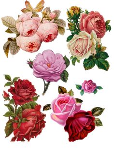 roses a