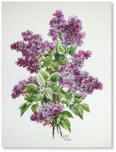 Romantic Flowers, Vintage Flowers, Botanical Flowers, Botanical Prints, Watercolor And Ink, Watercolor Flowers, Lilac Painting, Decopage, Language Of Flowers