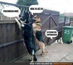 Funny pictures about Short People Humor. Oh, and cool pics about Short People Humor. Also, Short People Humor photos. Cute Funny Animals, Funny Animal Pictures, Funny Cute, Dog Pictures, Funny Dogs, Funny Images, Funny Photos, Super Funny, Weird Dogs