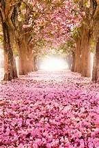 Pink Flowering Tree near iron fence - Bing images