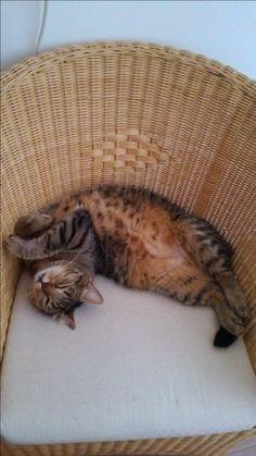 Mio Cat | Pawshake