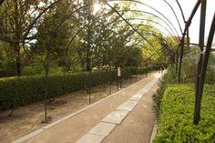 El jardín botánico es un oasis de tranquilidad en medio de Madrid ideal para pasear e introducir a los más pequeños al mundo de las flores y plantas.