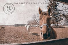 http://margsphotography.com/my-favourite-horse-photos/