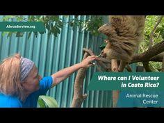 Volunteer Work, Volunteer Abroad, Animal Rescue Center, Turtle Conservation, Sea Turtles, Volunteers, Costa Rica, I Can, Animals