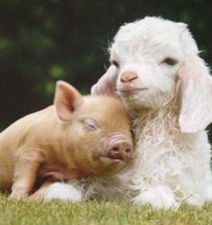 Animal Odd Couples | HubPages