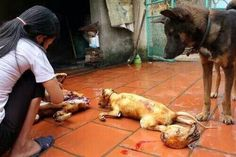 Archangel @mstoysav CHINA EXPOSED pic.twitter.com/XHtqx5PUyX Imagine your friend is slaughtered in front of your eyes! Incredible cruelty! RT