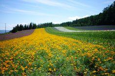 虹の花畑 3   by bluegreen405