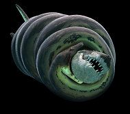 Just Try to Get This One on a Plane  'Titanoboa: Monster Snake' on Smithsonian Channel