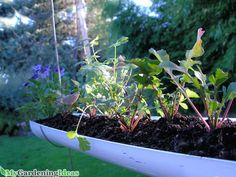 Gardening with hanging gutters