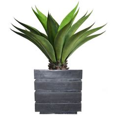 Laura Ashley 38-in. Artificial Aloe Plant, Black ($312) ❤ liked on Polyvore featuring home, home decor, floral decor, black, modern home accessories, laura ashley, black home decor, modern home decor and black planter