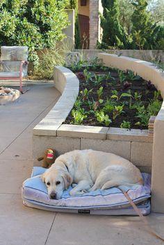 DIY Concrete Vegetable Garden | Laguna Dirt
