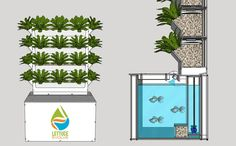 Aquaponics DIY Backyard - No-Fuss Programs Of Easy Aquaponics System - Some Thoughts - Off Grid Living Aquaponics Greenhouse, Aquaponics Diy, Aquaponics System, Cool Things To Make, Things To Come, Growing Lettuce, Small Space Gardening, Plant Growth, Urban Farming