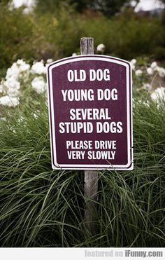 Old Dog, Young Dog, Several Stupid Dogs...