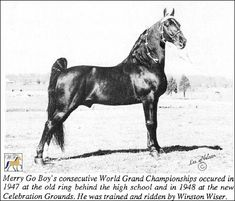 Westwood Farms - Merry Go Boy  A great TN walker.  Originally owned, broken, and trained by Windell Wiser, not Winston.