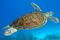 Gumbo Limbo, Sea Turtle Saviors | Palm Beach Illustrated