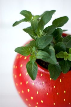 Make an herb planter that looks like a strawberry.