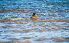 De zoutwinning in de Waddenzee leidt volgens Frisia Zout in Harlingen niet tot schade. Tiltmeters houden de gevolgen in de gaten.