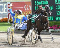 Im Themightyquinn Standardbred Horse, Harness Racing, Racing News, Race Horses, Dementia, Great Photos, New Zealand, Australia, Animals