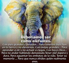 Resultado de imagen para deberíamos ser como los elefantes
