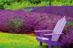 Blumengarten Anlegen with Lavendel Garten with Kiel Botanischer Garten from garten. Landscaping Plants, Garden Plants, Herb Gardening, Vegetable Garden, Garden Art, Lavender Companion Plants, Lavender Plants, Lavender Garden, Lavender Fields