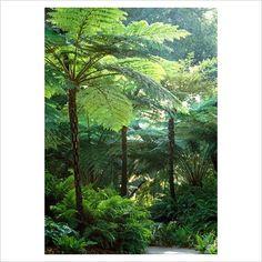 Lush Jungle River Poster - Custom Posters - Design Your Own Wall. Ferns Garden, Shade Garden, Australian Tree Fern, Lush, Landscape Design, Garden Design, Tropical Landscaping, Tropical Gardens, Garden Landscaping