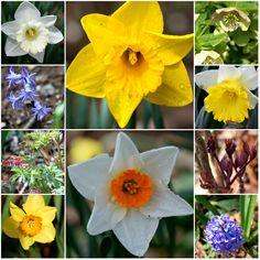 """Photo Challenge: Spring's Surprise """"It's all about creation and surprise. It just needs to be appreciated and watered like flowers. You have to water flowers. These peaks will come again."""" Sonny Rollins #spring #flowers #photography"""